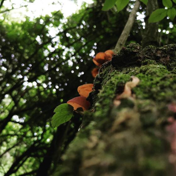 28-6-2020-PJC-Nature-Photography-Thumbnail