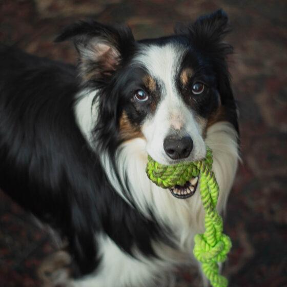 01-10-2020-Paul-Jackson-Photography-Guinness-Dog