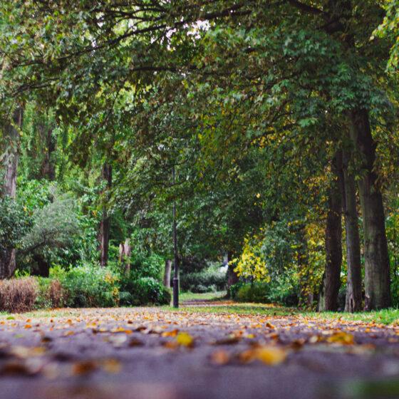 5-10-2020-Paul-Jackson-Photography-Autumn-Path-Leazes-Park-2