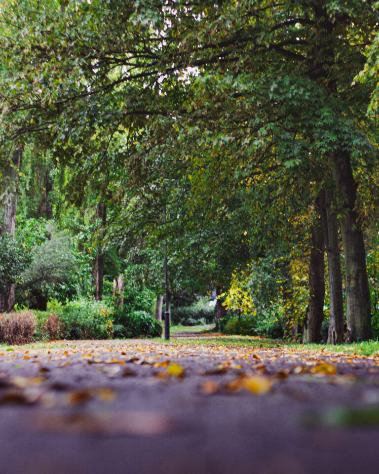 5-10-2020-Paul-Jackson-Photography-Autumn-Path-Leazes-Park-2