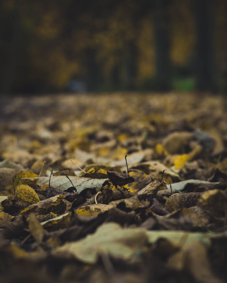 22-10-2020-Paul-Jackson-Photography-Autumn-Leaves