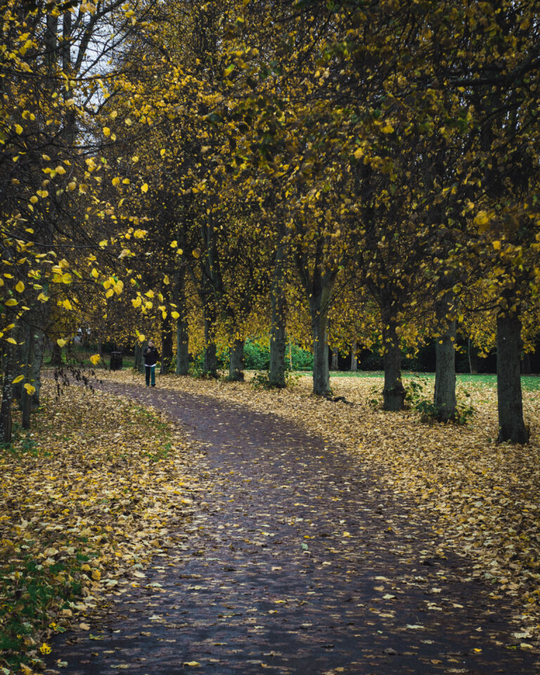 22-10-2020-Paul-Jackson-Photography-Autumn-Walk
